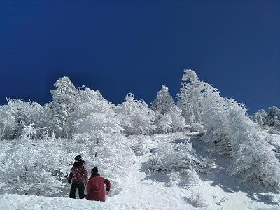 ハンタマ樹氷.png