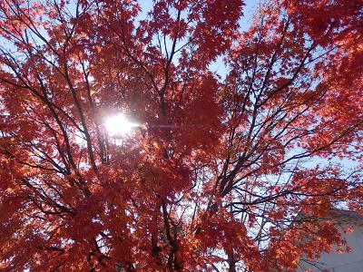 丘の公園紅葉2.png