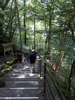 浄蓮の滝への道.png