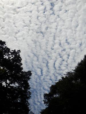 滝上の雲.png