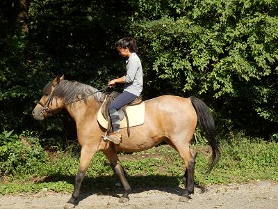 谷口牧場の馬.png