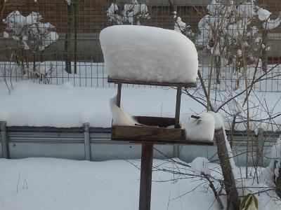 餌台の雪.png
