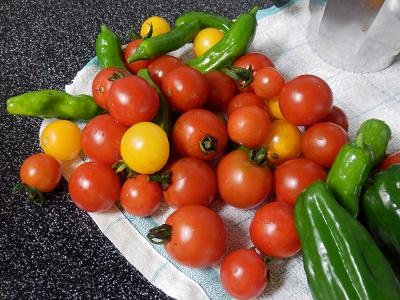 9月の収穫1.png