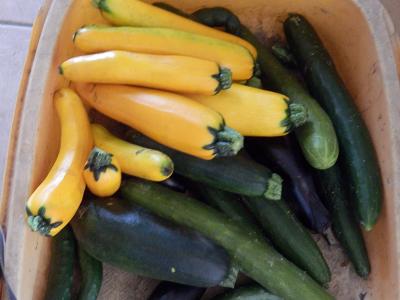 9月収穫3.png