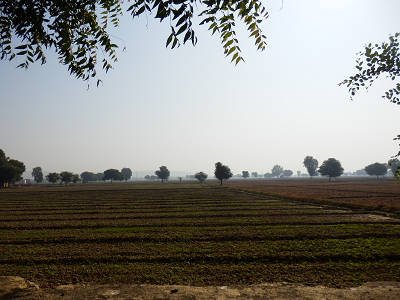 インド畑.png