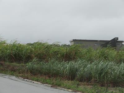 サトウキビ畑.png