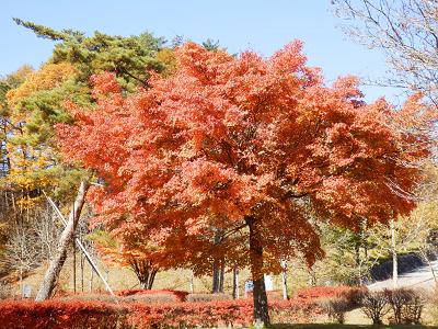 丘の公園紅葉.png