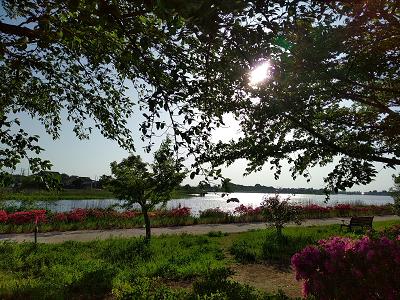 城沼の風景.png