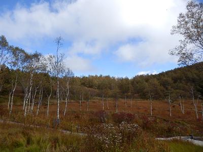 湿原と白樺.png