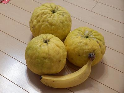獅子柚子2018.png