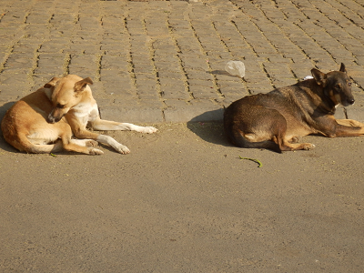 india 犬.png